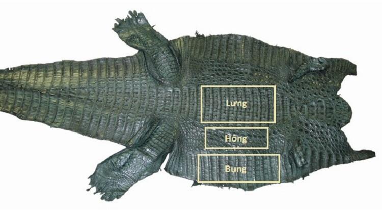 Vùng da của cá sấu Alligator được dùng để làm dây đồng hồ đeo tay